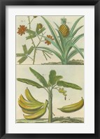 Histoire Naturelle Tropicals II Framed Print