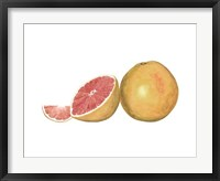 Framed Watercolor Grapefruit