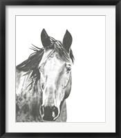 Wildlife Snapshot: Horse I Framed Print