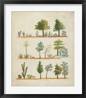 Framed Arbor Sampler II