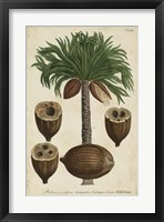 Framed Vintage Tropicals I