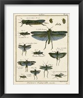 Histoire Naturelle Insects II Framed Print