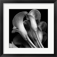 Framed Lillies2