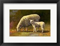 Framed Spring Lamb