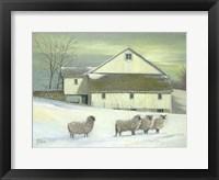Framed Sheep At Granough