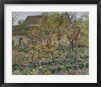 Framed Yellow Apples, 1892