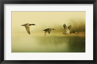 Framed Ducks Flying