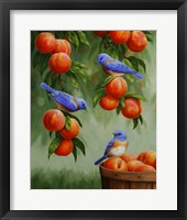 Framed Bluebirds and Peaches