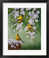 Framed Goldfinch Blossoms
