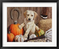 Framed Pumpkin Harvest Puppy