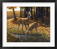 Autumn Innocence I Framed Print