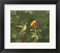 Framed Sweet Columbine