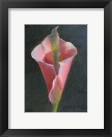 Framed Pink Cala Lily