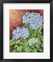 Framed Blue Hydrangeas