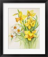 Framed Daffodils- Springs Calling Card