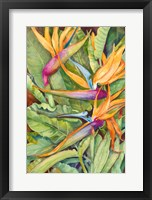 Framed Birds Of Paradise