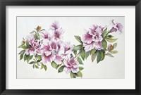 Framed Pink Azaleas