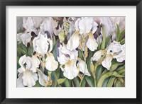 Framed Field Of Iris