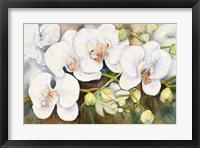 Framed Stem Of Orchids