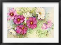 Framed Pink and White Cosmos