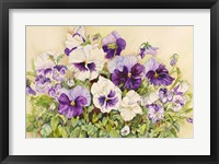 Framed White and Purple Pansies