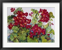 Framed Deep Red Geraniums