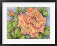 Framed Peach Blush Rose