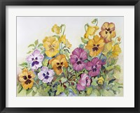 Framed Amber Pansies