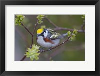 Framed Blue Jay on Tree Limb