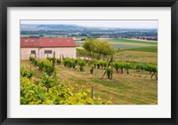 Framed View Over the Mother Vines, Champagne, France