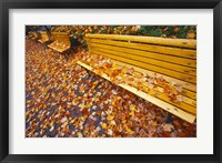 Framed Quebec City Park Bench in Fall