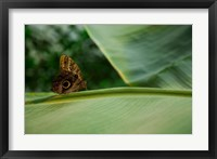Framed Butterfly on a Leaf