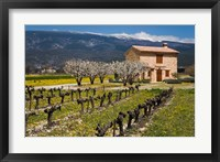Framed Stone House and Vineyard, Mt Ventoux
