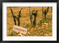 Framed La Truffe de Ventoux, Provence, France