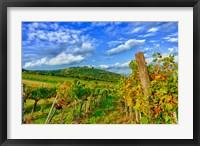 Framed Vienna vineyards, Austria