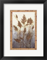 Framed Plume Grasses