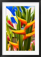 Framed Heliconia Flower, Seafront Market