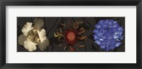 Framed Floral Burst I