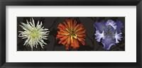 Floral Burst III Framed Print