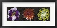 Framed Floral Burst IV