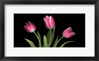 Framed Tulips 4