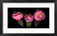 Framed 3 Camellias