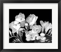 Framed Freesia III