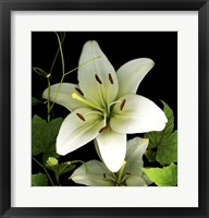 Framed White Lily 2