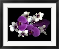 Framed Pink And White Orchids