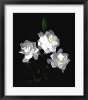 Framed Gardenia