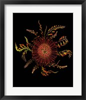 Framed Protea Pincushion