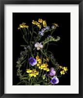 Framed Pansy, Rosemary & French Tarragon