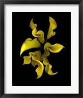 Framed Calla Lilies 4