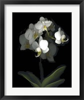 Framed Mini White Orchids